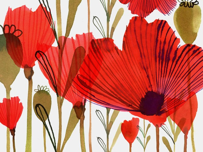 WILD_POPPIES Margaret Berg