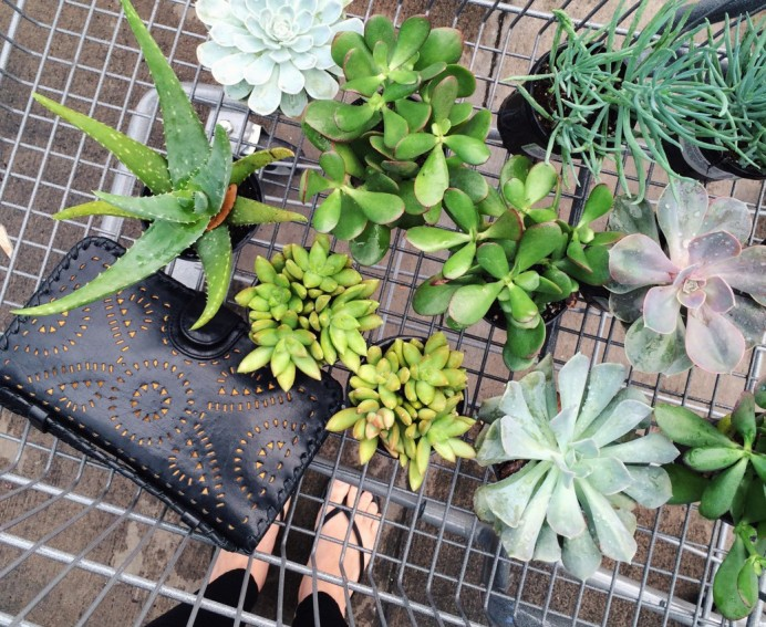 Tips for potting succulents at home | keiralennox.com